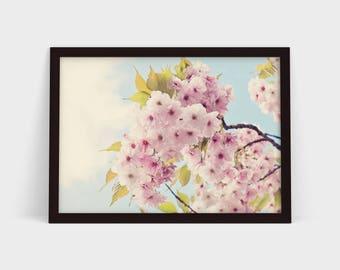 Cherry Blossom - Original Photographic Print