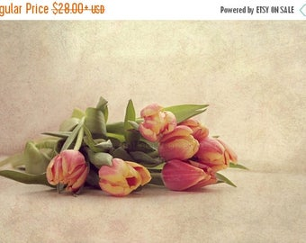 Christmas in July Delicate Spring Fine Art Photography Red Yellow Coral Tulips Cream Beige Feminine Romantic Shabby Chic Home Decor Wall Art