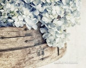 Farmhouse Wall Decor, Neutral Art, Light Blue Flower Photography, Rustic Country Decor   'Faded Denim No. 2' - Aged Page Series