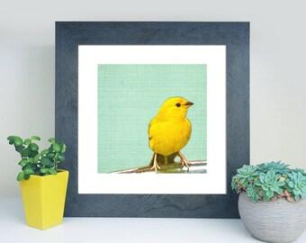 Rest - Bird photography print photo photograph nature yellow aqua blue green home nursery decor wall art choose a size bright colorful gift