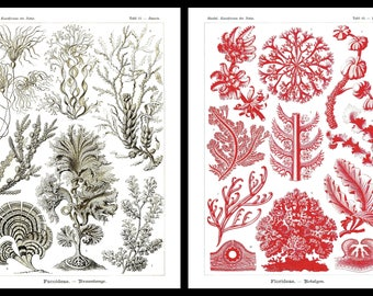Ernst Haeckel's Vintage Artwork Algae Set