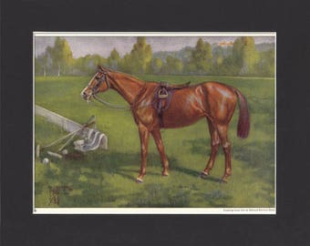 Polo Pony Print 1923 By Edward Miner Print of Painting Mounted with Mat - Polo pony painting, polo horse print sporting horse print polopony