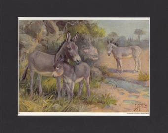 Wild Asses Print 1923 By Edward Miner Print of Painting Mounted + Mat - Donkey Picture Donkeys Print Ass Print Vintage Donkey Print