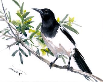Magpie Bird Art, Magpie, Original watercolor, 12 X 9 in, Magpie painting, illustration, bird art, yardbirds