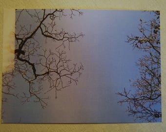 analog photography postcard