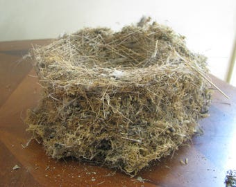 Bird Nest Natural Real Found on our Maine Woodlot Made of Grass and Moss