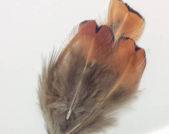 Pheasant Fluff Feather approximately 5 cm for craft work 5 Grams