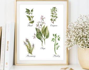 Watercolor Herb print, Botanical Kitchen sign Basil, Oregano, Sage, Rosemary Parsley Herbs Printable Art Wall Decor Home decor DIGITAL FILES