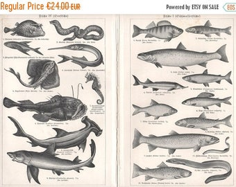 ON SALE Fishes, Fish Map, Antique Lithograph Print, Freshwater, Sea, Illustrations