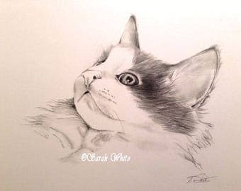 Kitty Graphite drawing
