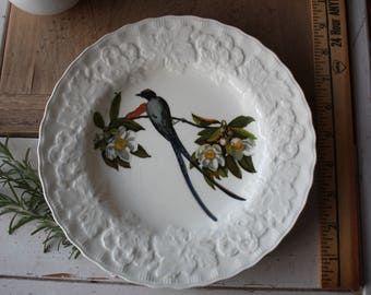 Alfred Meakin Birds of America Fork Tailed Flycatcher Plate #168