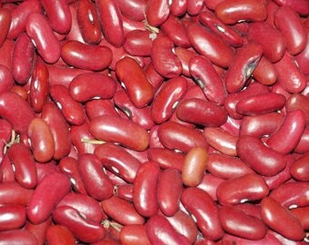 Dark Red Kidney Bean - Bush - Heirloom - 60+ seeds