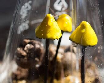 Radioactive artificial florarium