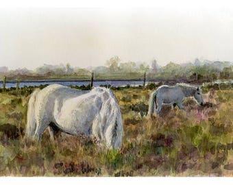 Horses. Camargue