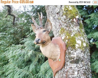 SALE 15% OFF Vintage French wall mounted Roe Deer head with antlers, (D6)