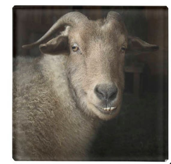 4in x 4in Glass Coaster Goat