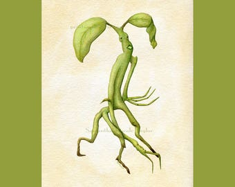Pickett the Bowtruckle Art Print - Fantastic Beasts & Where to Find Them - Vintage Botanical Hufflepuff Harry Potter Herbology Magizoology