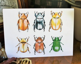 Jewel Scarab beetles CARD