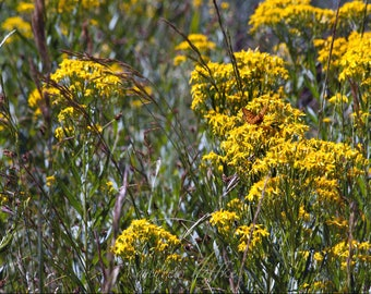 """Landscape Photography, Large Wall Art Print, Nature Photography, Fine Art Print, Yellow Flower Photography, Butterfly Photography,""""Monarchy"""""""