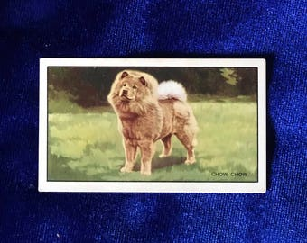 1936 Chow Chow Dog Art Gallaher Cigarette Card Mother's Day Gift!