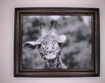 Giraffe Print 8 x 10