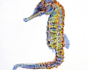 Seahorse wall decal, seahorse decoration, tropical fish decor, seahorse gift, marine life wall sticker, sea horse wall art, rainbow seahorse