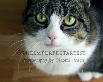 Kat portret etsy - Kleur opzoeken ...