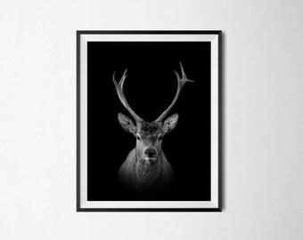 Deer print, deer wall art, animal print, stag print, deer head print, scandinavian print, black and white, minimalist print, modern print