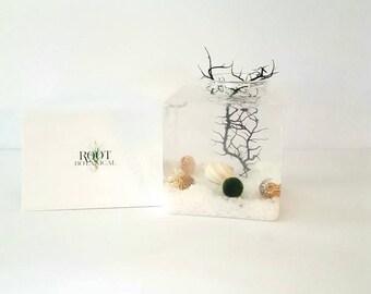 Marimo Moss Ball Terrarium, Glass Cube Marimo Aqua Aquarium Kit