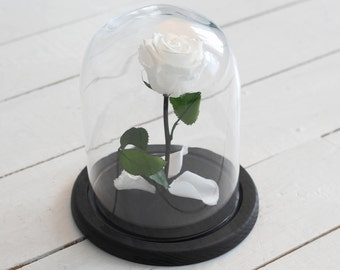 Beauty and the beast rose (Medium), Mother's day gift, forever white rose, Enchanted Rose, rose in glass, preserved rose, five  year rose
