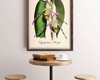 Antique Botanical Flowers Art Print, Botanical Print, Vintage Botanical Home Decor, Antique Book Plate Illustration, Giclee Flower Picture