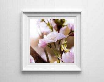 Cherry Blossom, Original Photography Print, Square, Flowers, Wall Art, Decor