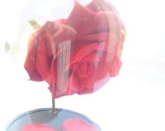 Rose under glass - and the beast