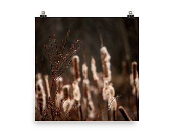 cattails print | nature photography