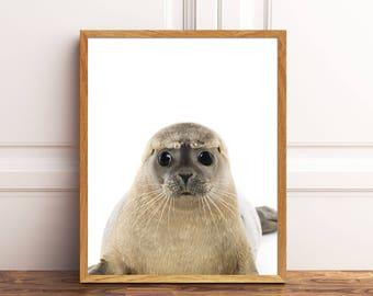 Cute Seal, Baby Seal, Baby Animal Prints, Safari Animal Prints, Nursery Prints, Nursery Decor, Animal Art, Animal Portraits,Baby Animal Art