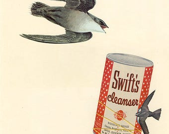Swifts' speedy cleaning--they will go the distance. Original collage by Vivienne Strauss.
