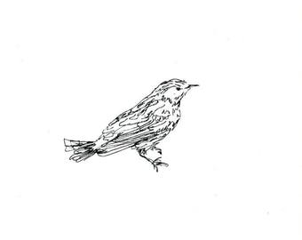 Sketchbook Sale - Bird #6 Original Ink Line Drawing - 8x10 Songbird Original Art