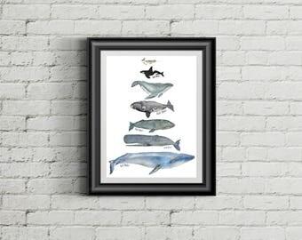 Whales Large Size Fine Art Giclee Print, Nautical Coastal Decor, Nursery Decor