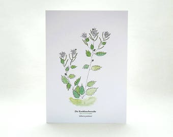 Greeting Card | wild herbs | garlic mustard | ecofriendly cards with envelopes | wilderness | botanical illustration | edible wild foods