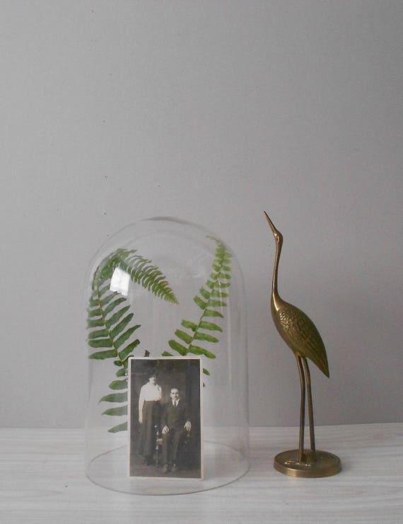 large rustic glass dome specimen display // curio storage
