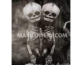 Two Headed Conjoined Skeleton 8x10 Photography Print, Black and White Skull Art, Halloween Decor Macabre Oddity, frighten