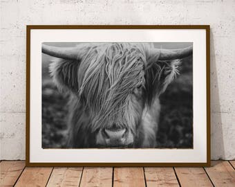 Highland Cow Black and White Print