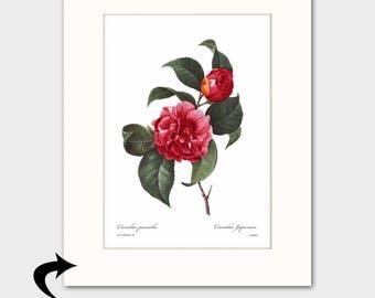 Camelia Art w/Mat (Antique Botanical Art, Red Bedroom Wall Decor) Matted Redoute Flower Print