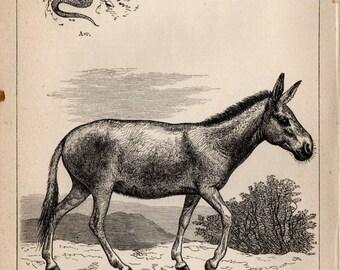 Antique Print, 1871 WILD ASS Of SIBERIA, Engraving, beautiful wall art vintage engraved b/w illustration animals 8