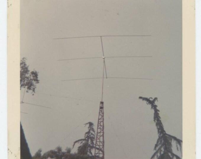 Antennas, Trees Abstract, c1960s: Vintage Snapshot Photo (78598)