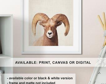 Ram print, Bighorn sheep art, Wildlife nursery decor, Ram centerpiece, Wildlife canvas, Ram wall decor, Wildlife photo Print/Canvas/Digital