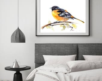 Baltimore Oriole Bird fine art print, bird watercolor painting print, black and yellow bird print, bird art, giclee print of bird
