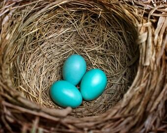 Bird Nest, Nature Photography, Nest Wall Art, Photo Prints, Birds Nest with Blue Eggs, Fine Art Photography, Nest Print, Rustic Wall Decor