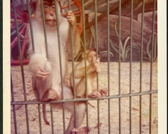 Vintage Color Photo of Monkeys Behind Bars at the Zoo 1970's, Original Found Photo, Vernacular Photography