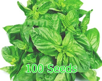 100 Large Leaf Italian Basil Seeds